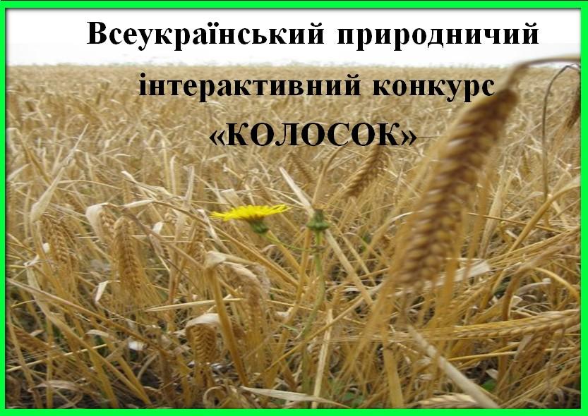 """Конкурс """"Колосок - 2010"""""""